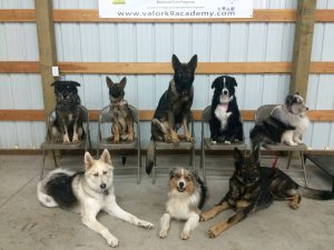 group dog training sessions