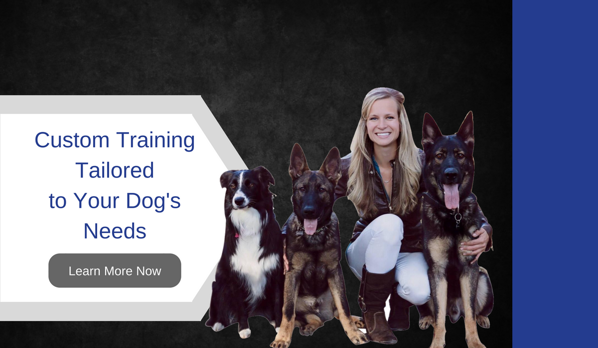 custom dog training spokane washington