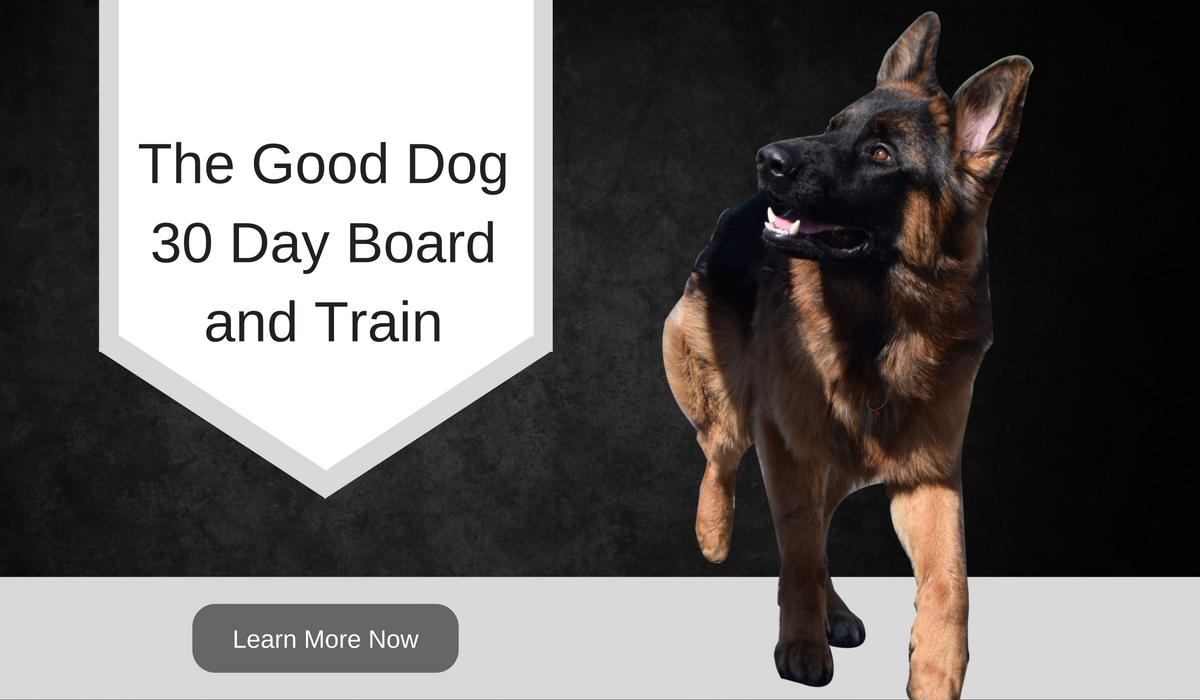 board and train dog spokane washington