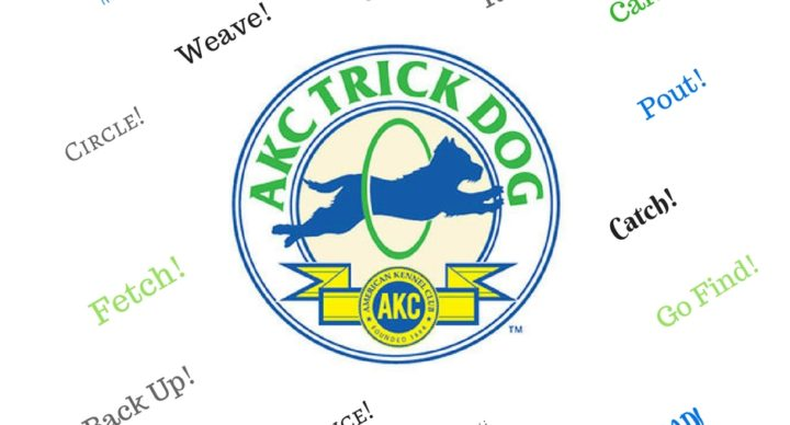AKC Trick Dog Titles Offered at Valor K9 Academy