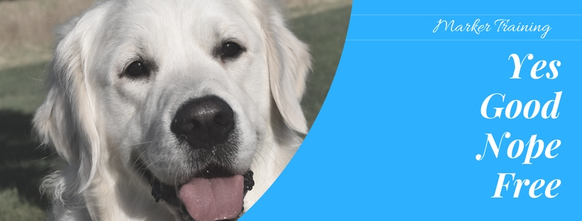 puppy marker training