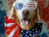 Valor K9 Academy's 8 Tips for Keeping Your Dog Safe This Fourth of July