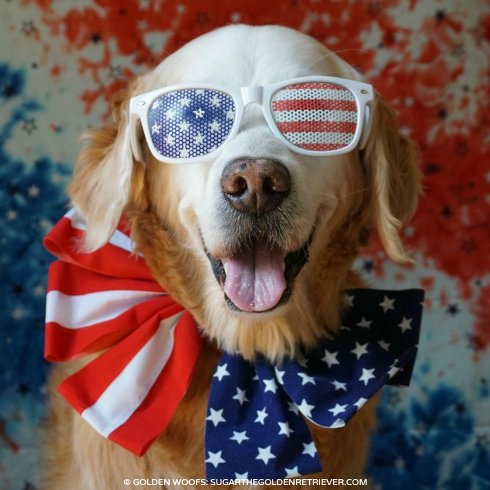 8 Tips for Keeping Your Dog Safe This Fourth of July
