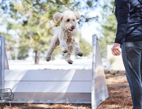 All about dog agility training!