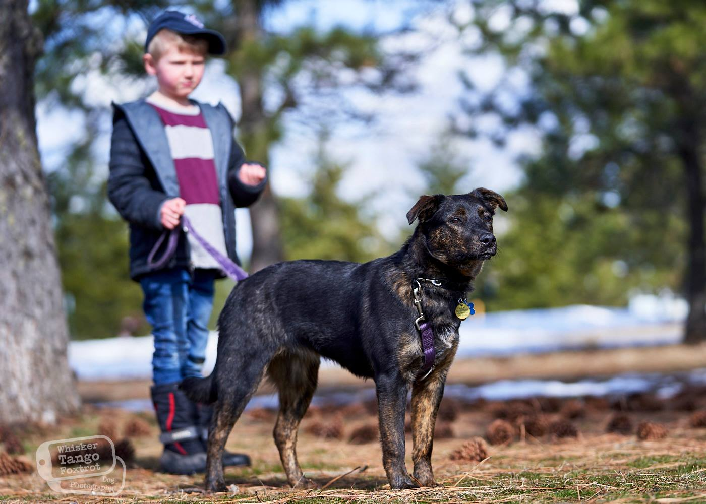 leash training dogs for children