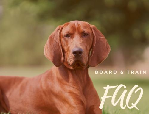 Board & Train FAQ