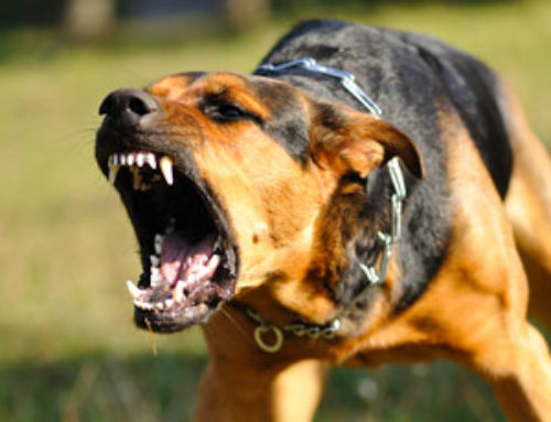 What to do if your dog gets attacked