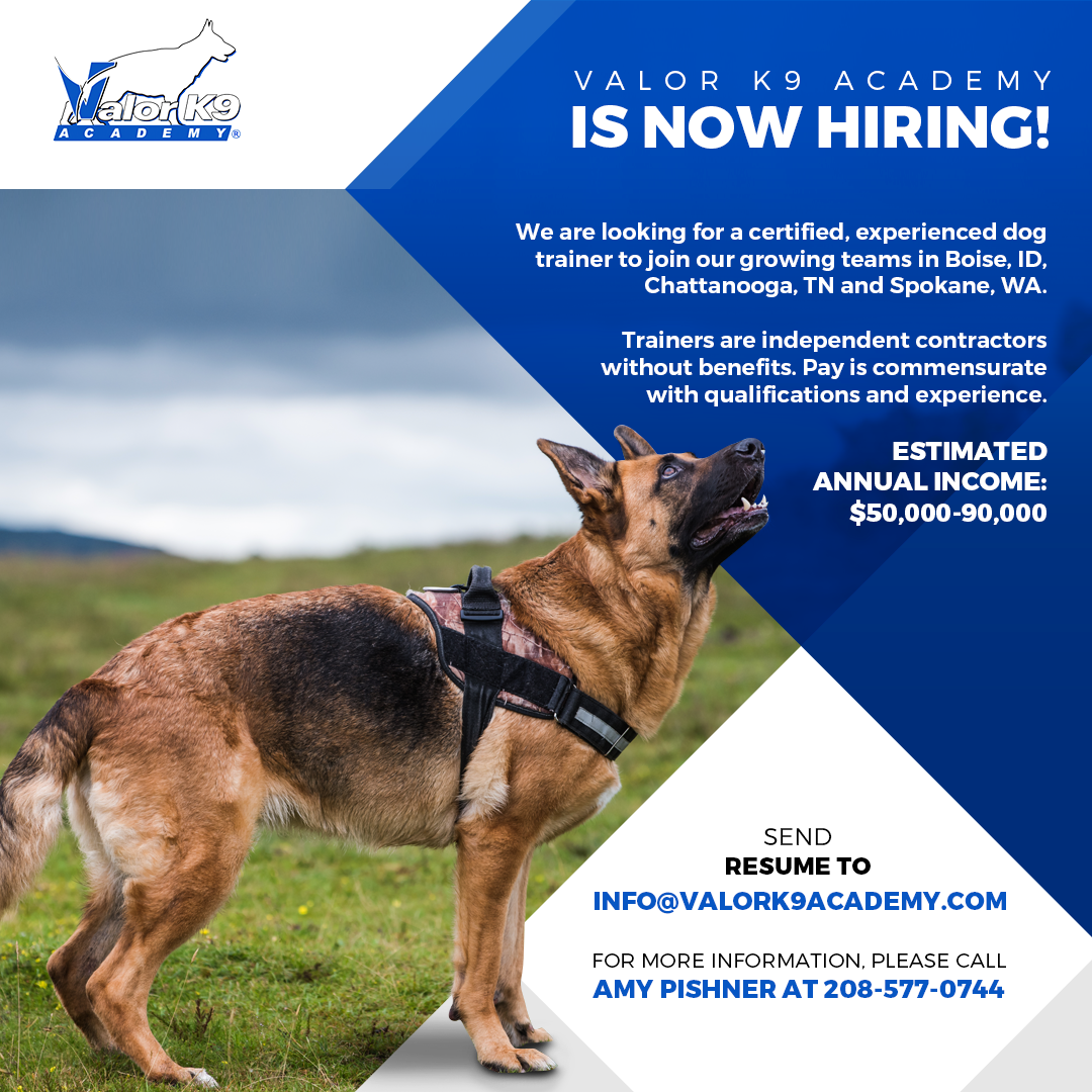 Hiring Professional Dog Trainer Chattanooga
