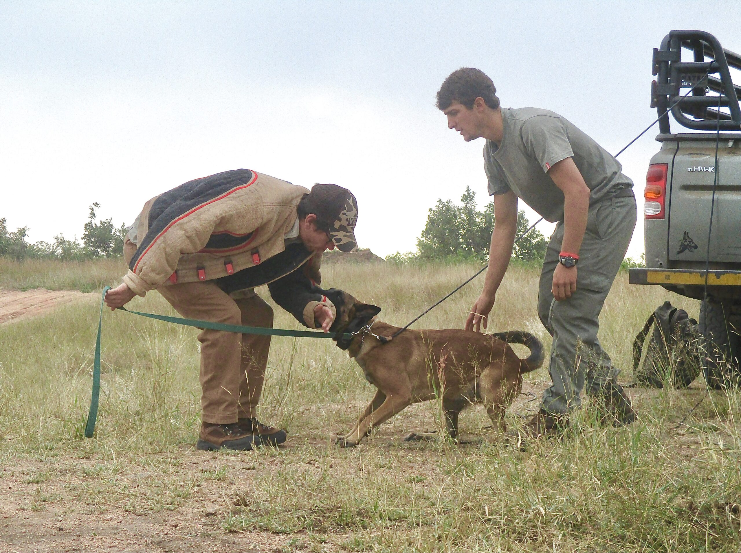 Malinois bite work south africa