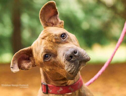 Dog Rescue Spotlight: Path of Hope in Spokane WA