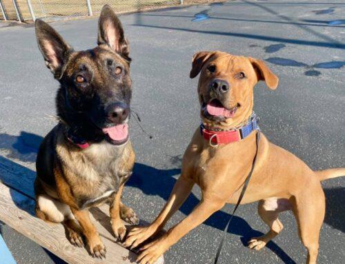 Meet Adoptable Dog ~ Leon!