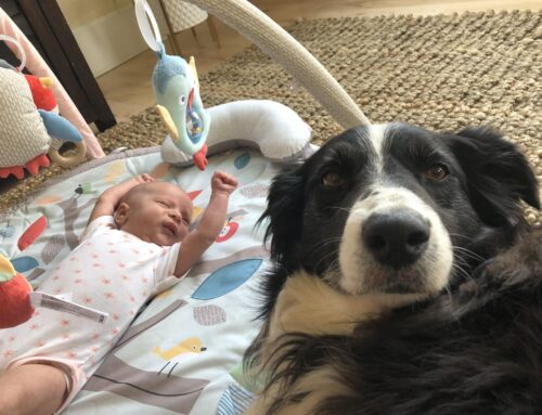 How to properly introduce dogs to a newborn baby