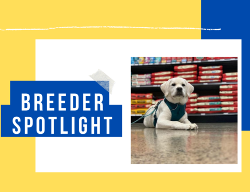Breeder Spotlight: Fidelity Farm Labradors in Washington