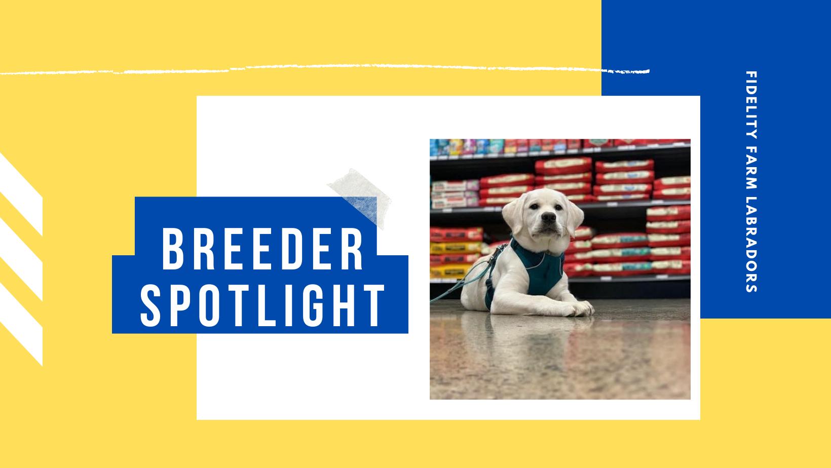 fidelity farm breeder highlight labrador breeder spokane wa