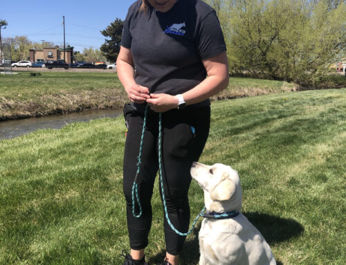 Meet the Trainer – Samantha Lee