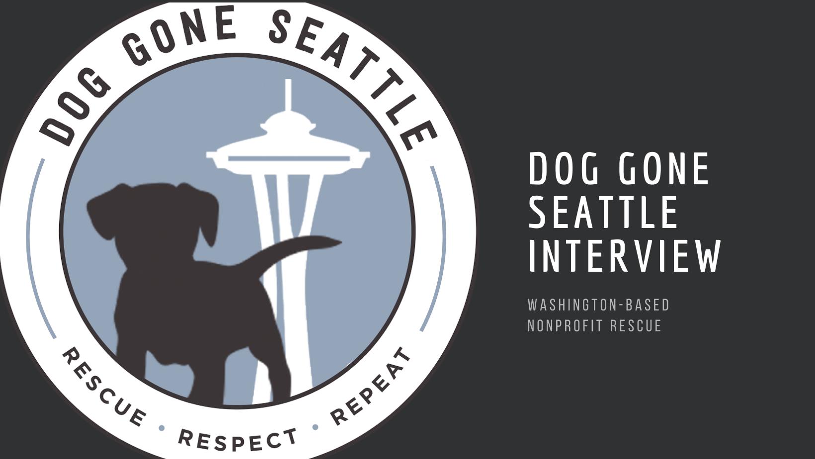 dog gone seattle interview