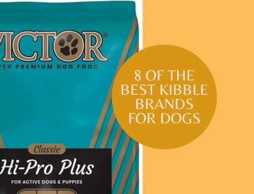 8 of the best kibble brands for dogs