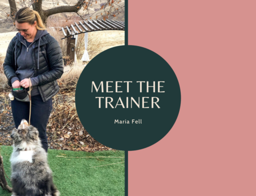 Meet the Trainer – Maria Fell