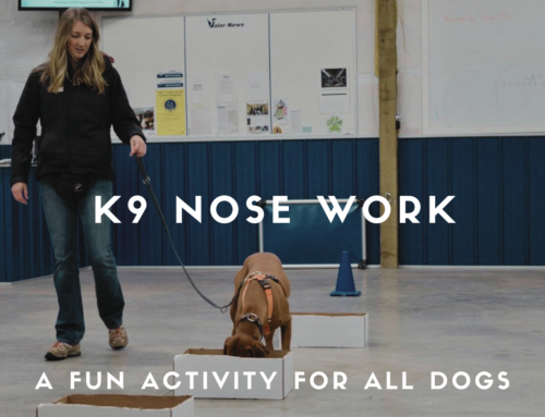 The Sport of K9 Nose Work