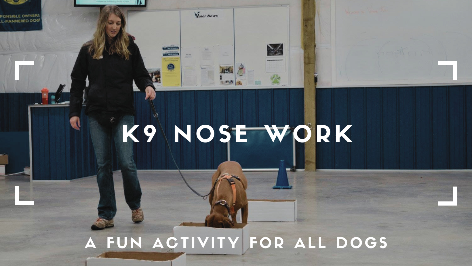 k9 nose work blog article